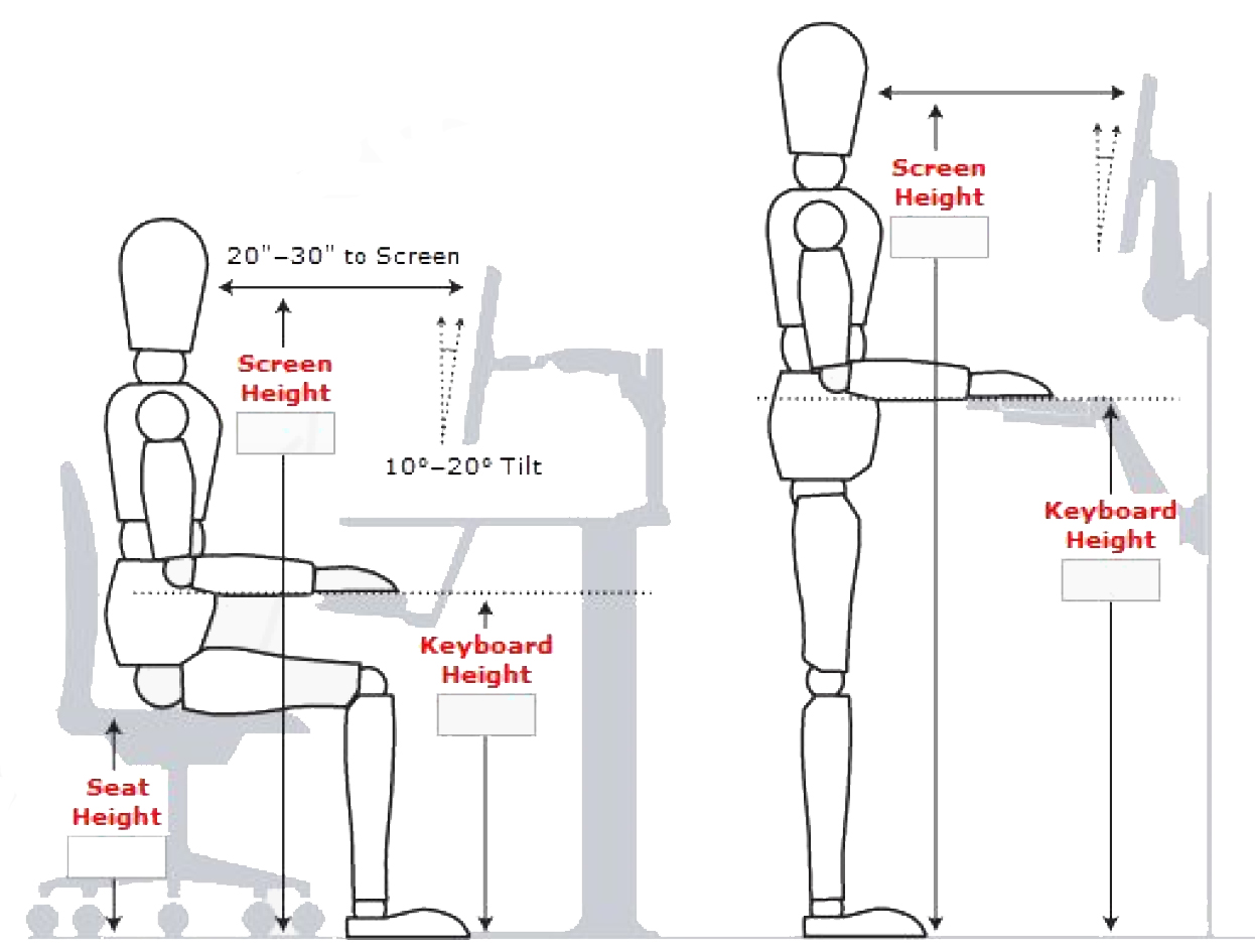 basic sitting and standing postures